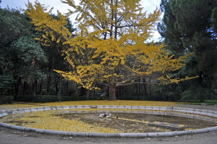 Peque a gu a forestal de las calles de madrid madriz for Piscina fuente del berro